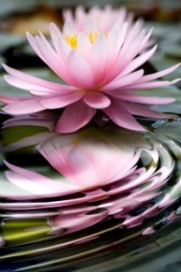 enlightening-quotes-lotus-ripples